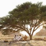 high-res-abraham-tree2